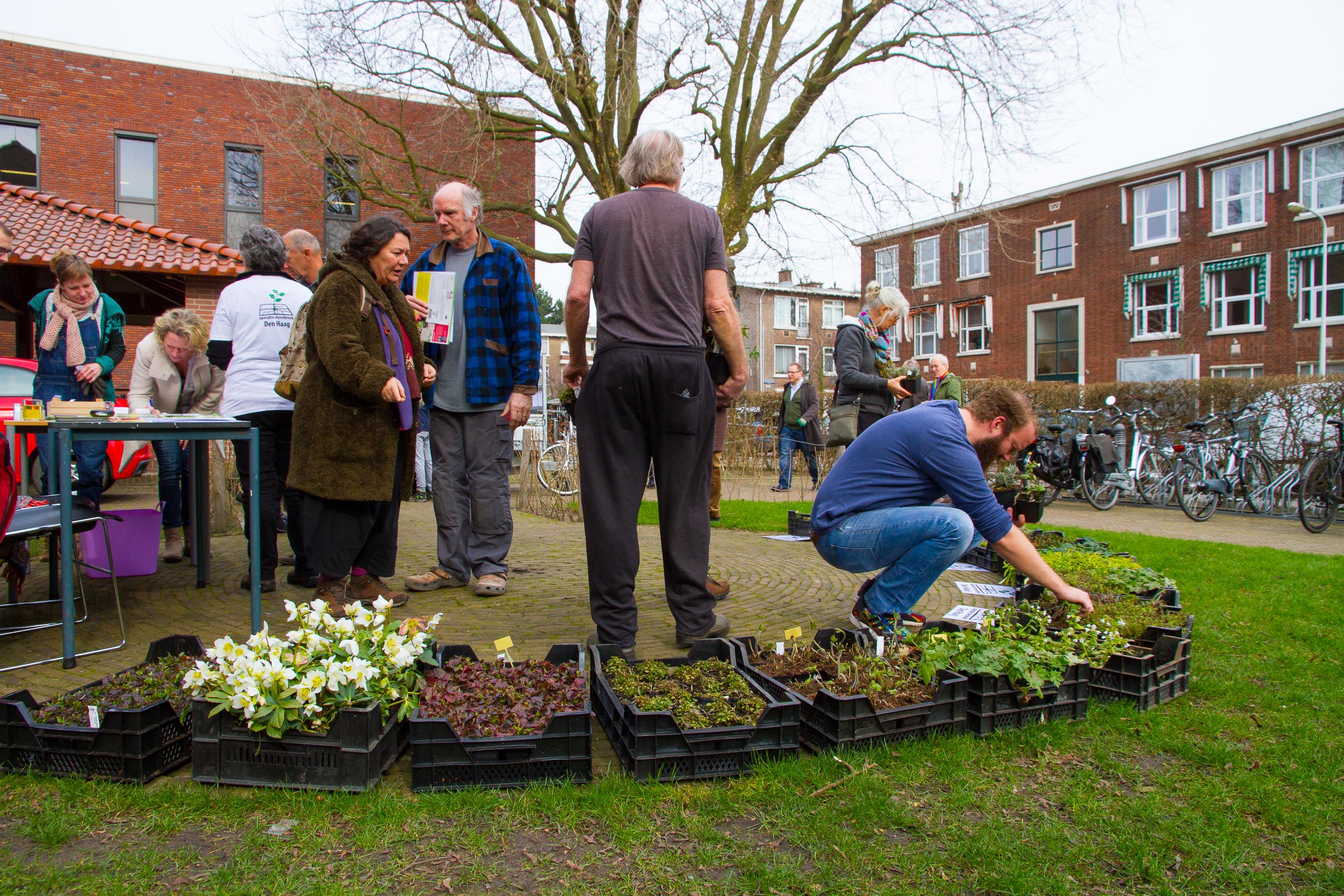 Tegels Den Haag : Start operatie steenbreek seizoen enorm succes:u2026 duurzaam den haag